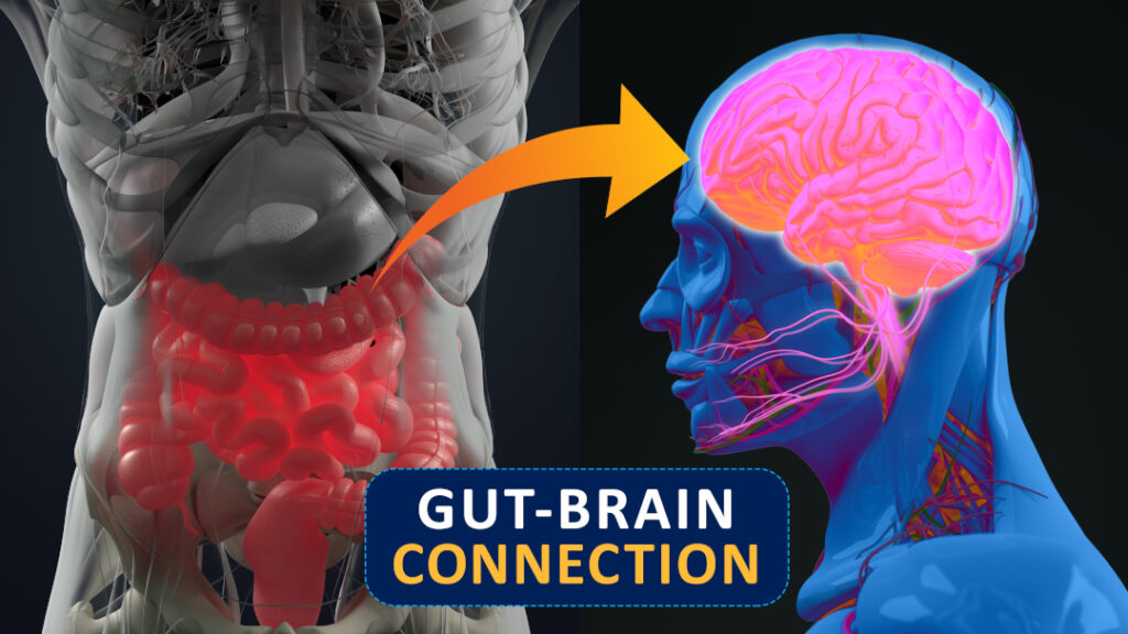 """An anatomical digital illustration of the intestines next to a similarly depicted illustration of the brain. An arrow is directed from the intestines to the brain with a title below reading """"Gut-Brain Connection"""""""